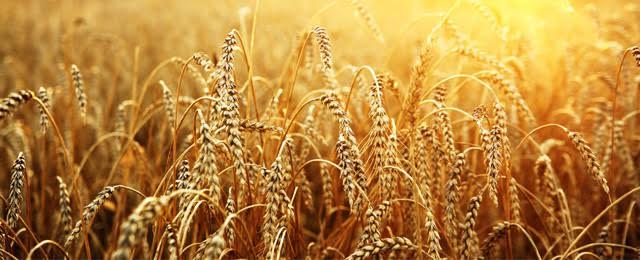 nadelen-van-graanproducten