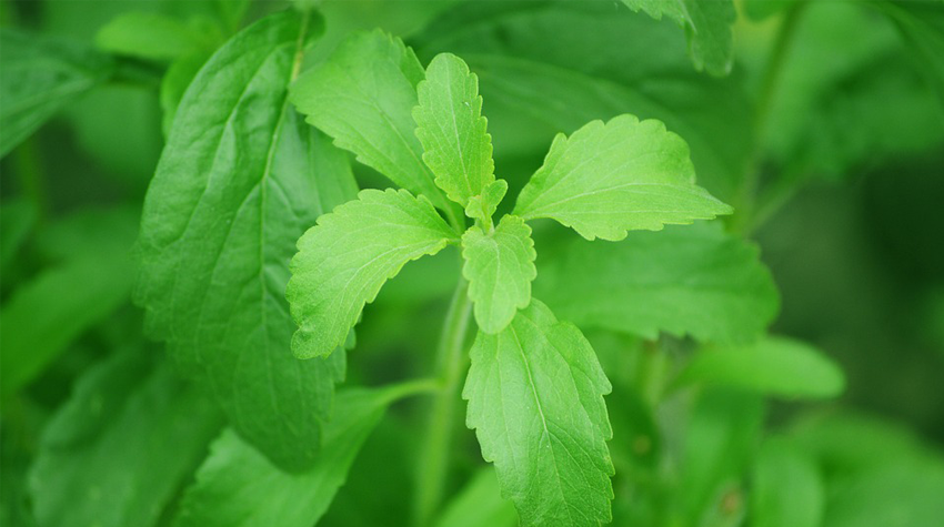 voedingssupplementen met stevia